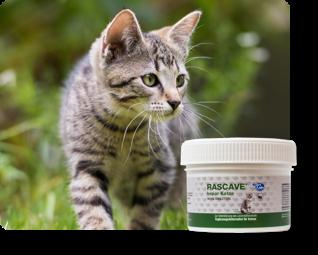 Für Katzen - Nahrungsergänzung