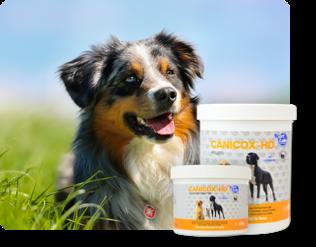 Für Hunde - Nahrungsergänzung