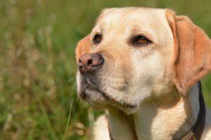 Im Kreislauf der Jahreszeiten – Temperaturbelastungen durch Hitze bei Hund  & Pferd