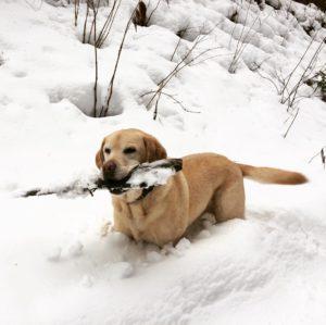 Happy im Schnee