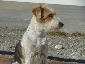 Autsch – chronische Schmerzen beim Hund erkennen
