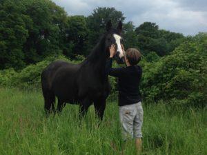 Können Pferde glücklich sein?