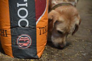 Krümelmonster – wenn Hunde den Boden sauber fressen