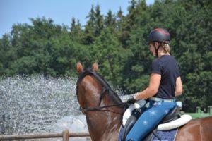 Wo Fleiß, da Schweiß – Pferde baden an heißen Sommertagen