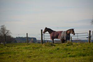 Des Pferdes neue Kleider – die Übergangsdecke löst die Fliegendecke ab