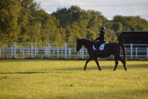 Soll ein Pferd mit Leckerlis belohnt werden?