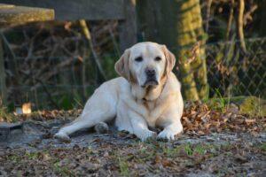 Unser Hund wird alt – und niemand kann es glauben