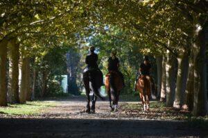 Lockdown im Pferdestall – das Pferd nach der Trainingspause wieder auftrainieren