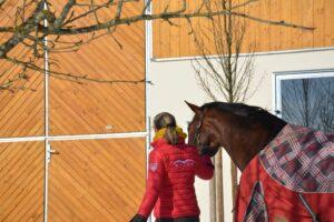 Herz-Kreislaufprobleme beim Pferd sind kein Sommerthema