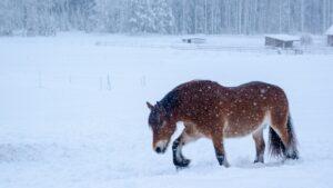 Schneekoppel vs Gatschauslauf – wie unsere Pferde dem Boden trotzen und dabei gut durch den Winter kommen