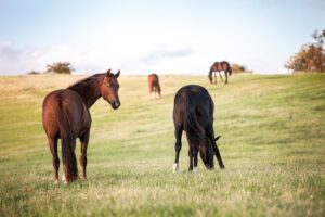Jedes Pferd braucht einen Kumpel – die Bedeutung von Sozialkontakten