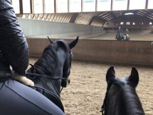 Was ist schon ein normales Pferd?