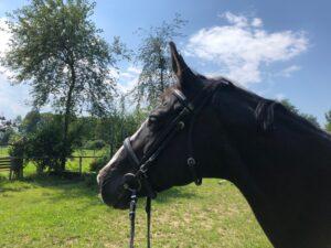 Vom Pferd fallen kann man immer