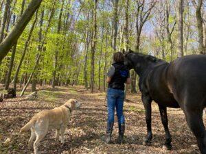 Altes Pferd in Bewegung