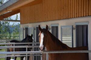 Zimmer mit Aussicht – damit das Pferd viel sieht