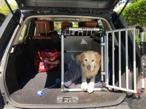 Der Hund bleibt lieber im Auto