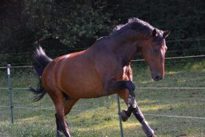 Fesche Freudensprünge – und was den Pferderücken gesund erhält