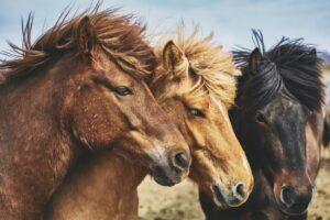 Familienbande, Teil 1 – Pferde erfassen nach kurzer Zeit, wer zur Familie gehört