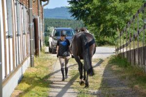 Mit dem Pferd an der Hand gehen