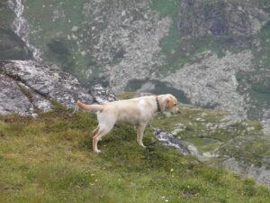 Der Hund in den Bergen