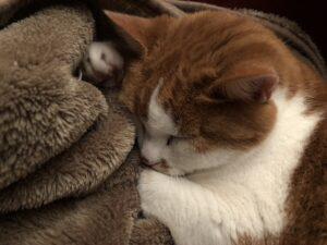 Und täglich grüßt der Weltkatzentag