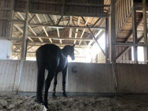 Ein Pferdeleben in der Box