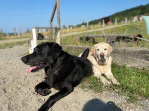 Familienbande, Teil 2 – Zusammengehörigkeit bei Hunden